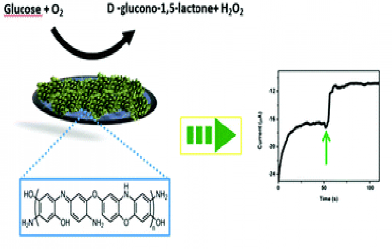 Poly o-aminophenol prepared by Cu II catalyzed air oxidation and its use as a bio-sensing architecture.